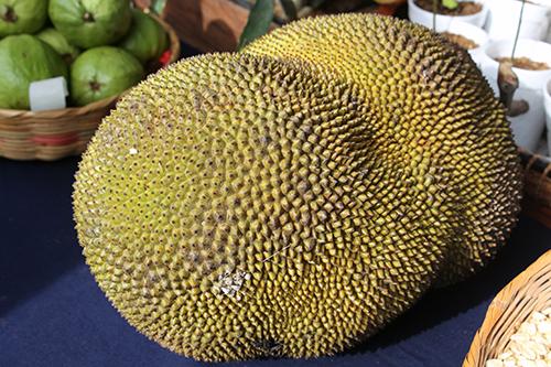 Fruta Gato causa sensación en Guaymango - Periódico Equilibrium (blog)