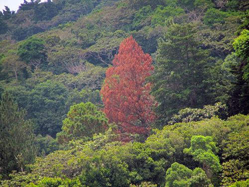 El contraste boscoso de Apaneca.