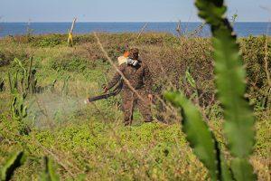 Fuerza Armada elimina mayor población de langosta detectada
