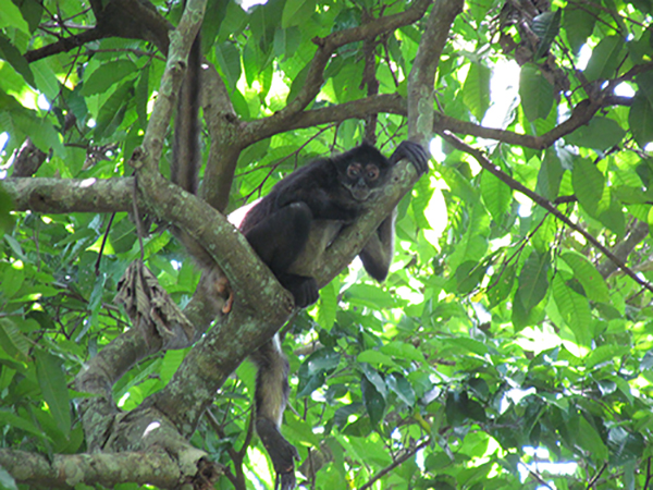 Un paseo familiar por el bosque Nancuchiname le permitirá ver en hábitat natural a estos animales. Haga turismo familiar.